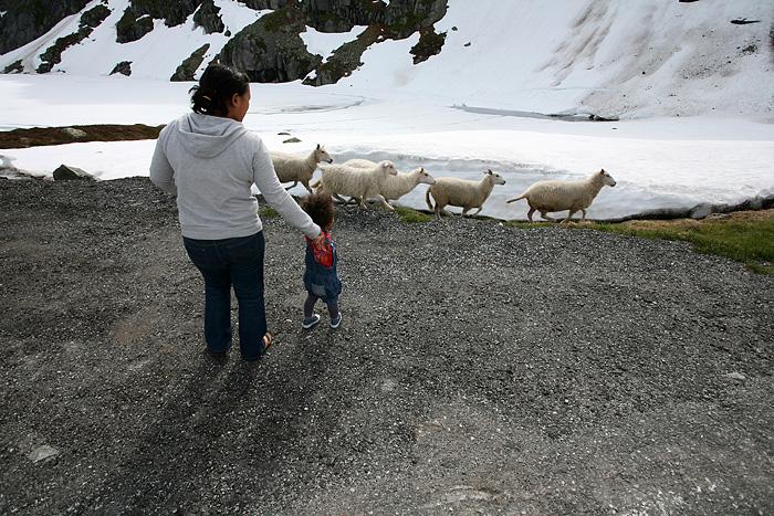 Bye bye les moutons !