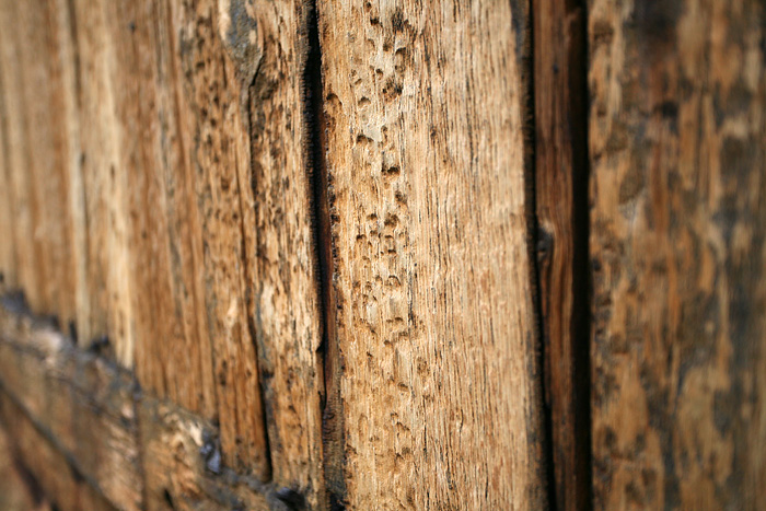 la texture du bois est intéressante. Et en plus ça sent le saumon fumé !