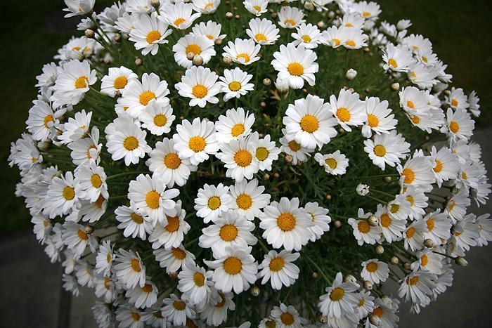 de jolis pots de flowers à l'entrée du parc