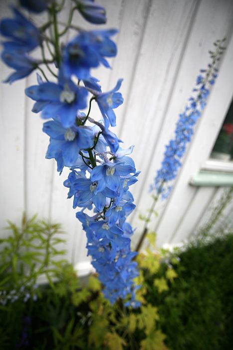 des fleurs décorent les maisons