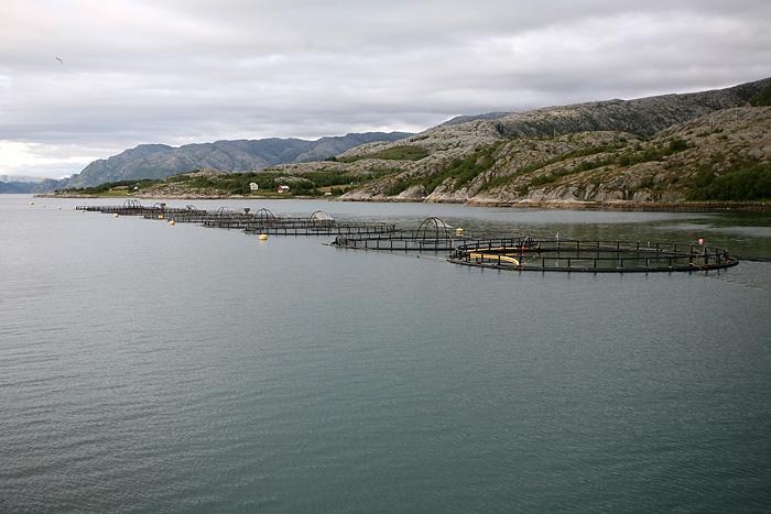 on passe juste à côté d'un élevage de saumons