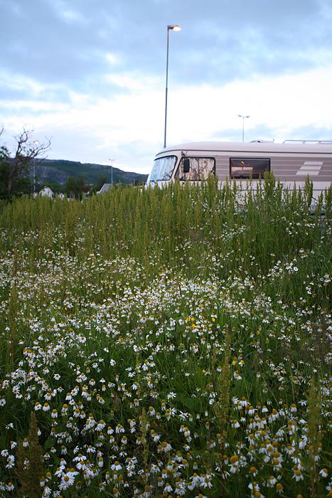 le camion caché par les fleurs