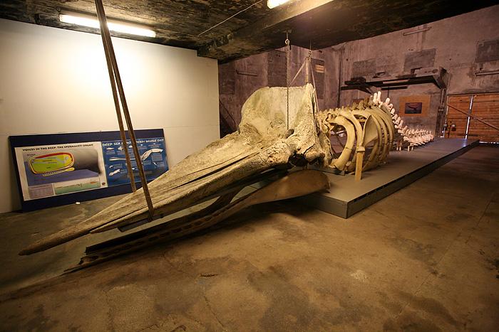 la tête fait au moins 3 mètres de long