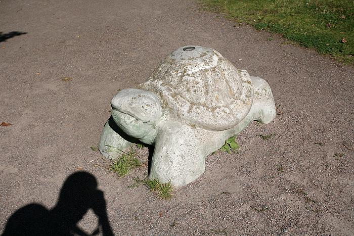 Tient, une tortue !