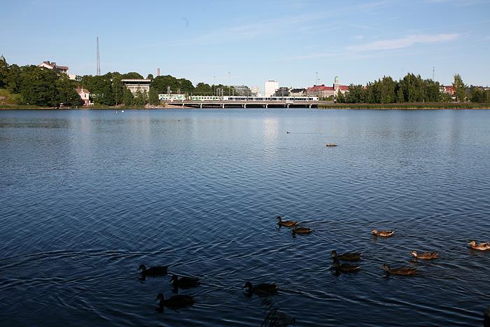 Des canards Helsingasques