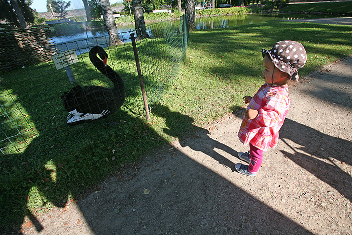 Nous descendons dans le parc du chateau. Un petit lagon nous y attend avec deux cygnes noirs