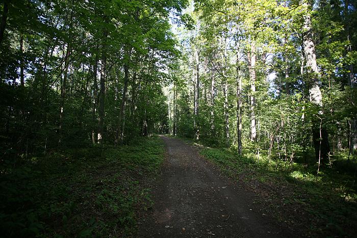Puis une forêt
