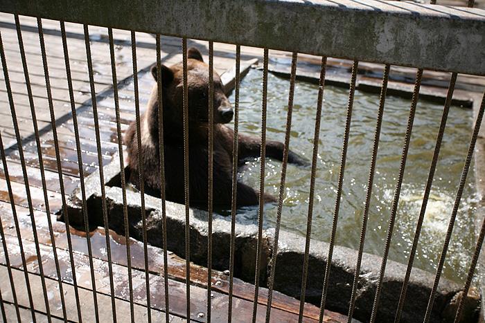 Le gros ours est au top par contre. Paisible, à la fraîche, décontracté du gland...
