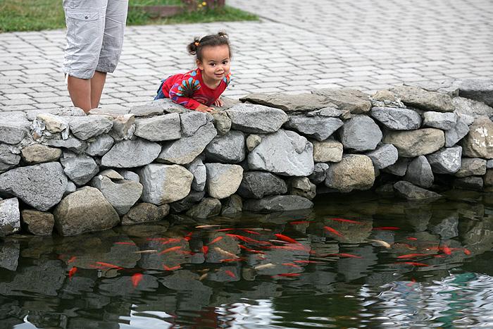 Ainsi que plein de poissons rouges !