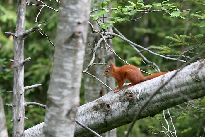 il y'avait aussi un écureuil en liberté