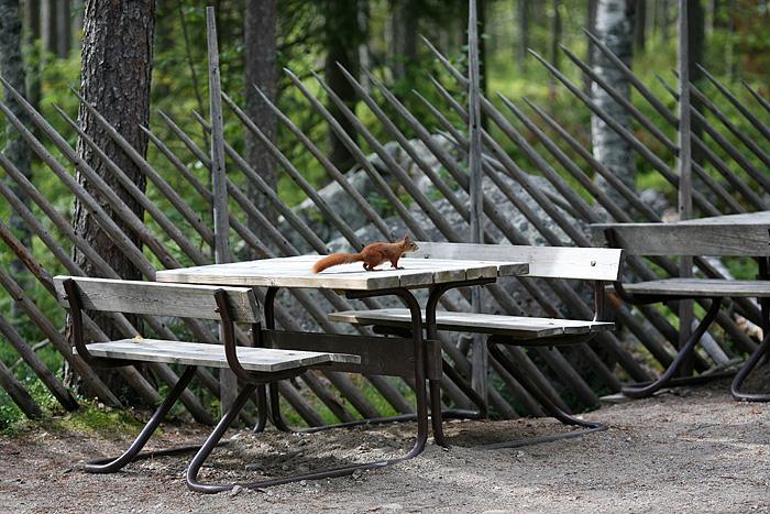 et toujours notre écureuil qui nous suivait partout